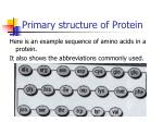 primary structure of protein