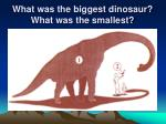 what was the biggest dinosaur what was the smallest69