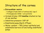 structure of the cornea13