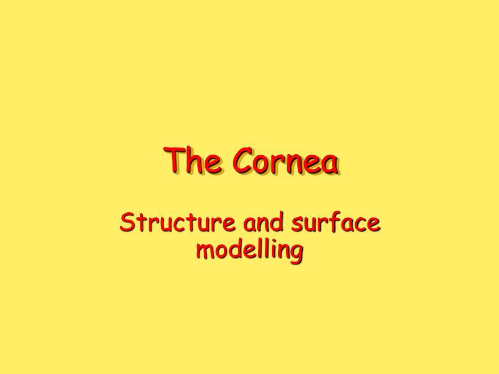 the cornea l.