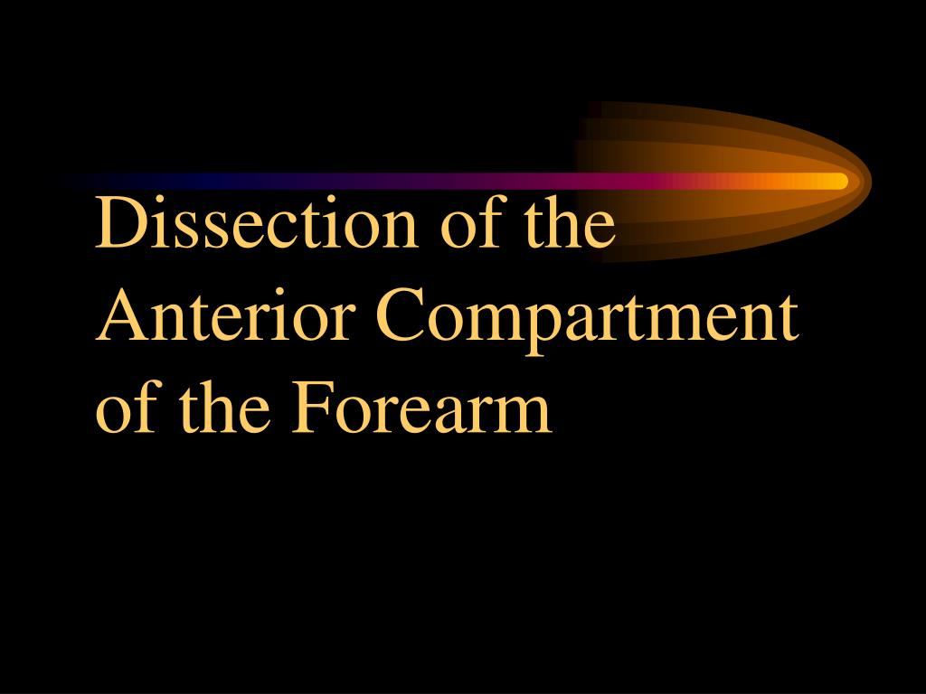 dissection of the anterior compartment of the forearm l.