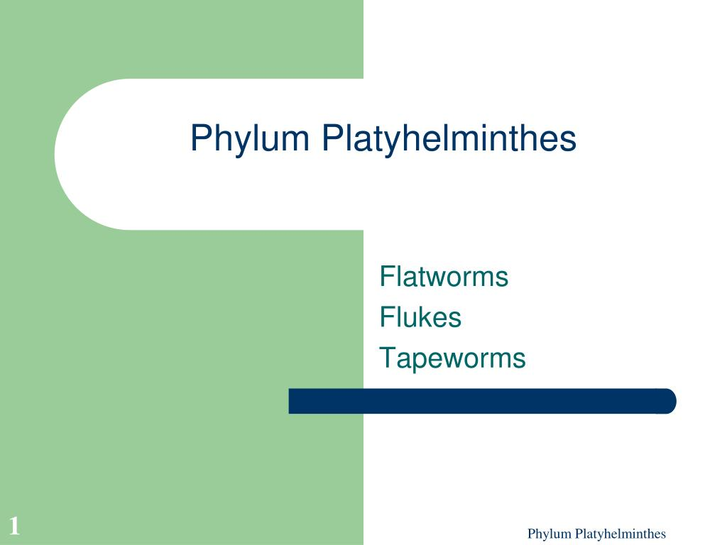 phylum platyhelminthes l.