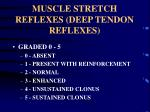 muscle stretch reflexes deep tendon reflexes