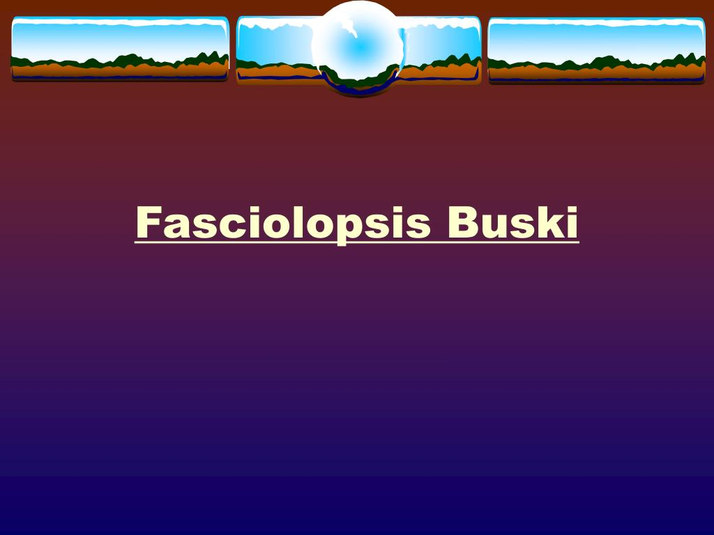 fasciolopsis buski l.