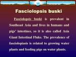 fasciolopsis buski2