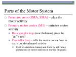 parts of the motor system