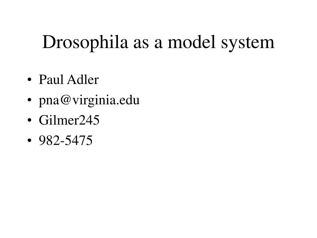 drosophila as a model system l.