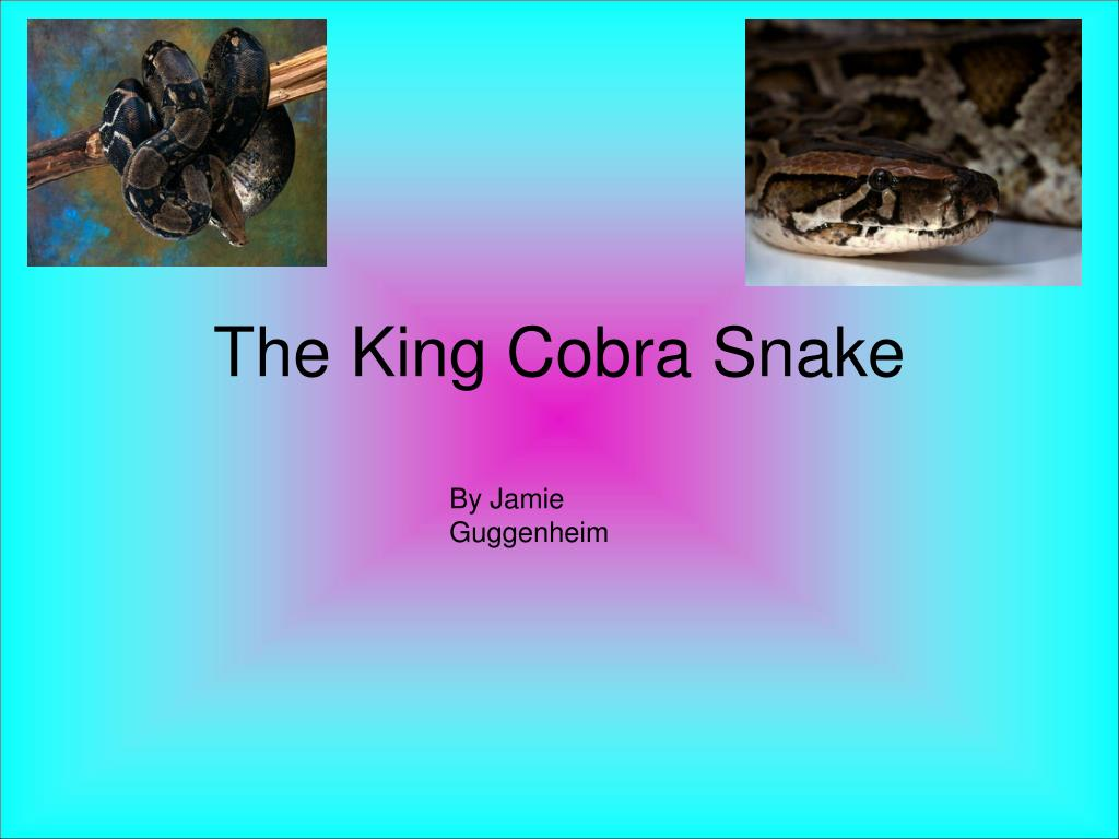 the king cobra snake l.