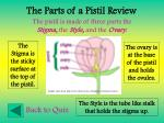 the parts of a pistil review85