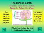 the parts of a pistil