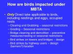 how are birds impacted under mbta