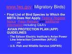 www fws gov migratory birds