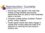reproduction courtship37