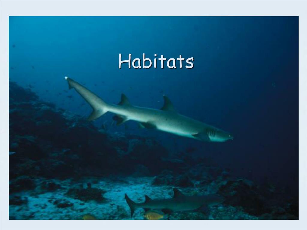 habitats l.