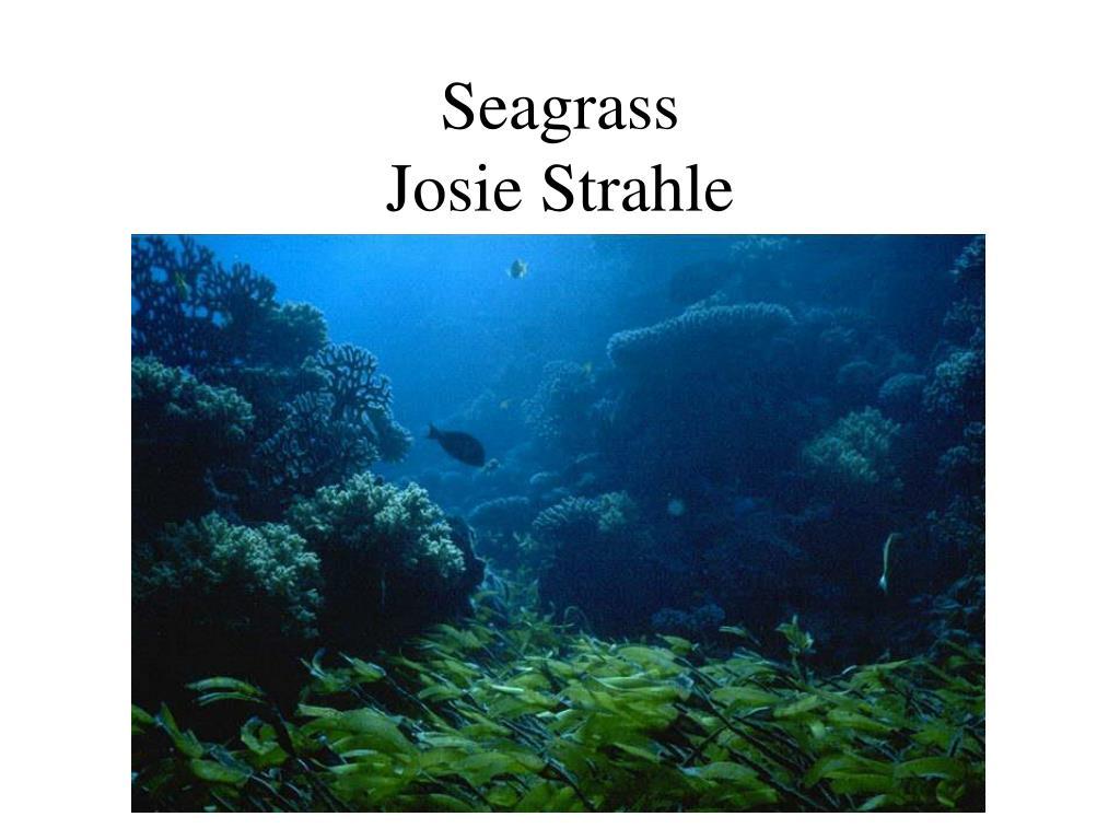 seagrass josie strahle l.