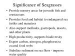significance of seagrasses