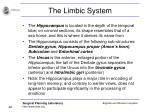 the limbic system46