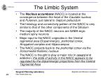 the limbic system48