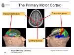 the primary motor cortex20