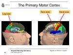 the primary motor cortex22