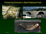 protecting animals in banff national park