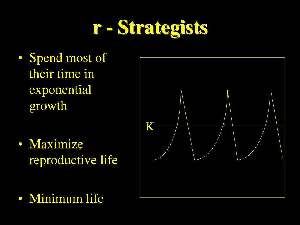 r - Strategists