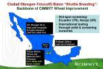 ciudad obregon toluca el batan shuttle breeding backbone of cimmyt wheat improvement