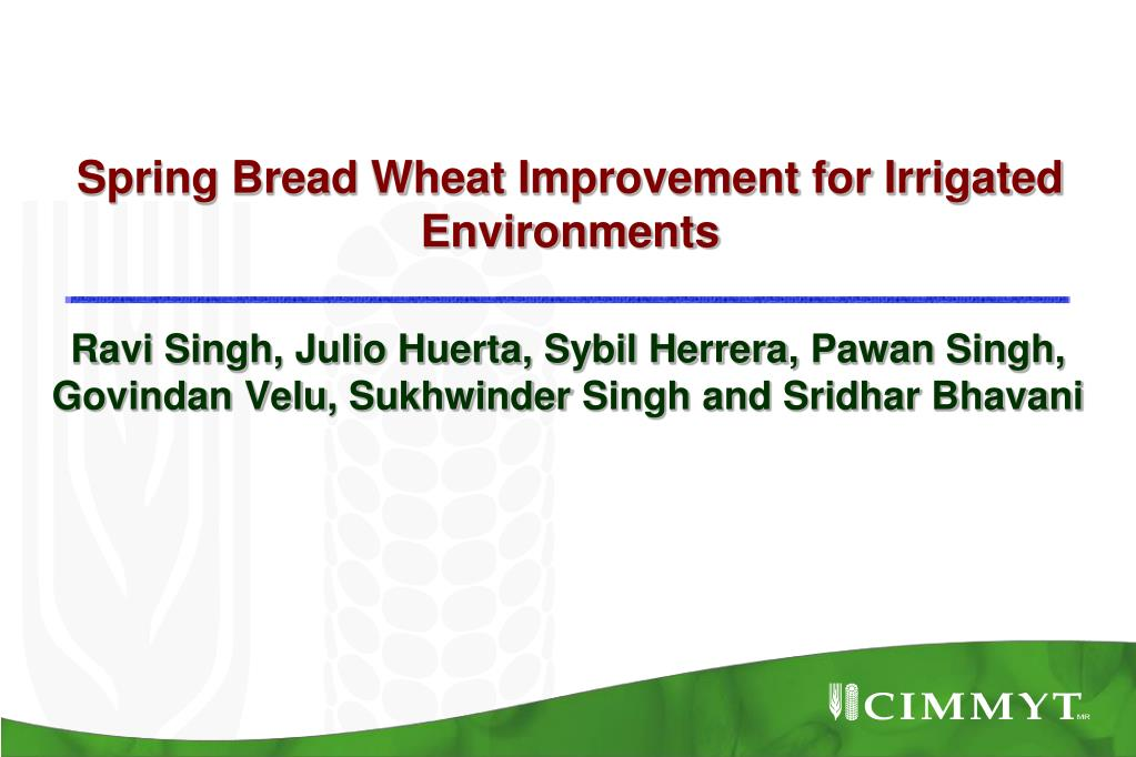 spring bread wheat improvement for irrigated environments l.