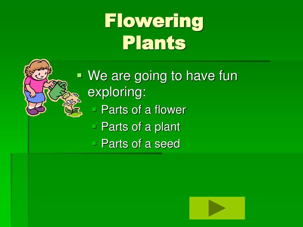 flowering plants l.
