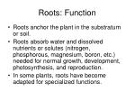 roots function