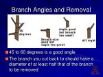 branch angles and removal