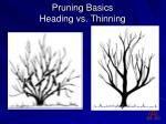 pruning basics heading vs thinning