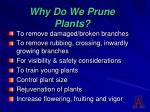 why do we prune plants