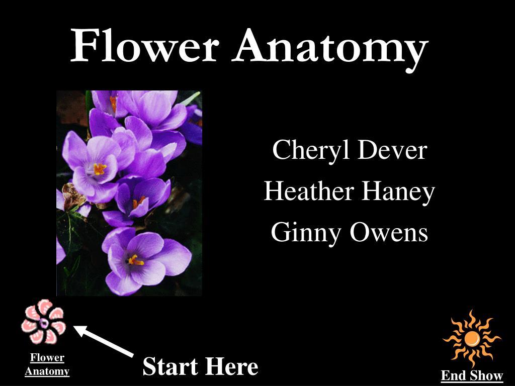 flower anatomy l.