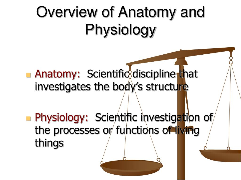 overview of anatomy and physiology l.