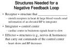 structures needed for a negative feedback loop