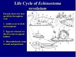 life cycle of echinostoma revolutum
