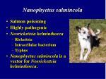 nanophyetus salmincola26