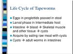 life cycle of tapeworms