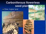 carboniferous flowerless seed plants