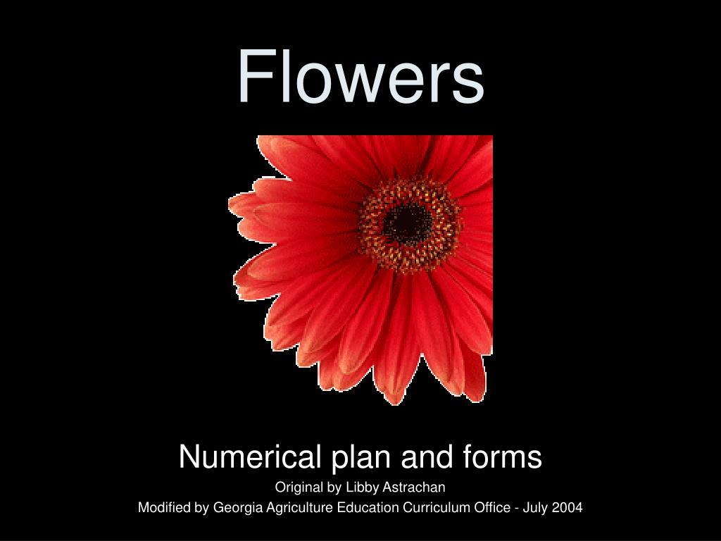 flowers l.