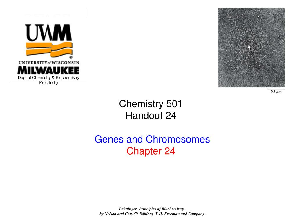chemistry 501 handout 24 genes and chromosomes chapter 24 l.