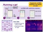 running a gel