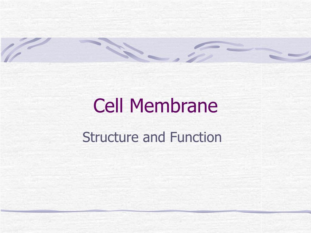 cell membrane l.