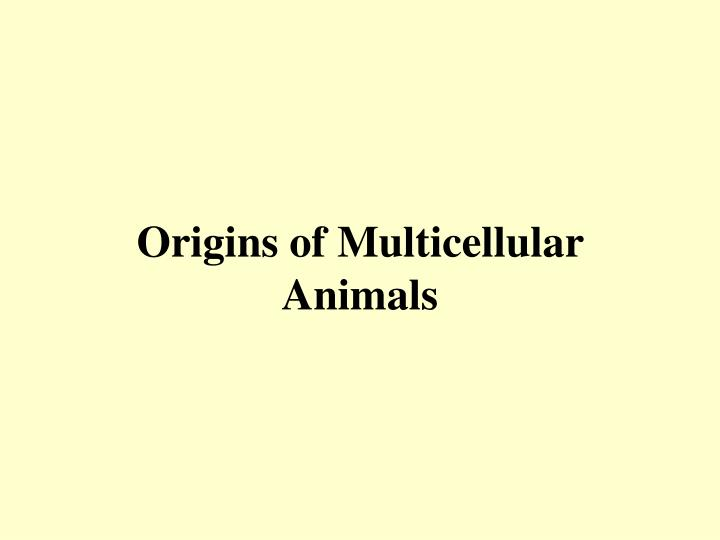 origins of multicellular animals n.