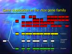 gene duplication in the hox gene family16