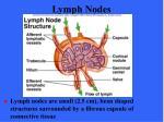 lymph nodes35