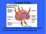 lymph nodes36