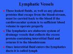lymphatic vessels4