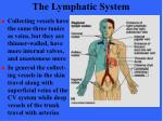 the lymphatic system15